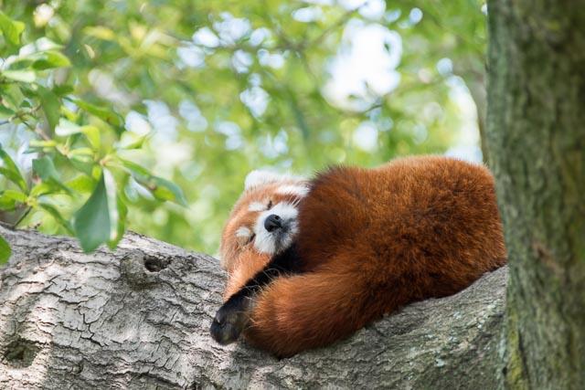 Norfolk Zoo-10