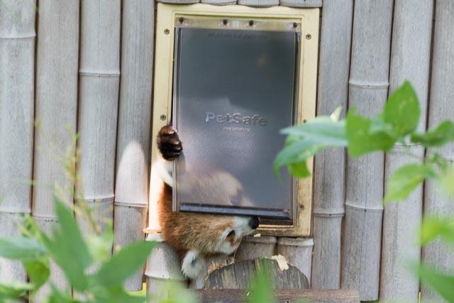 Norfolk Zoo-11