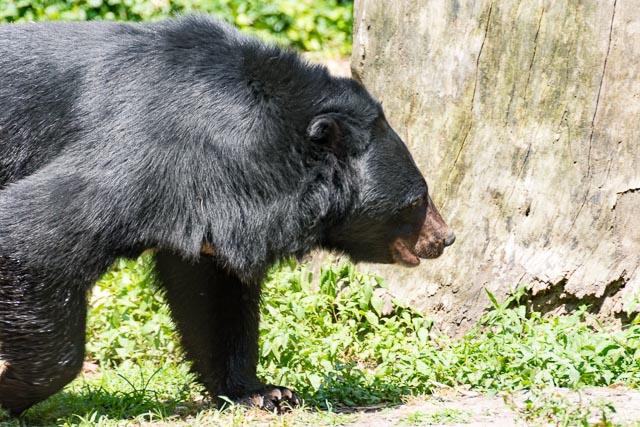 Norfolk Zoo-13