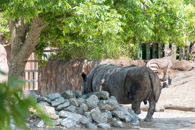 Norfolk Zoo-14