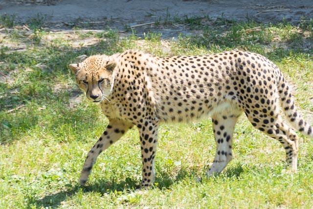 Norfolk Zoo-16