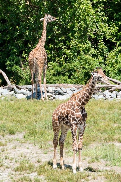 Norfolk Zoo-18