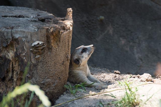 Norfolk Zoo-29