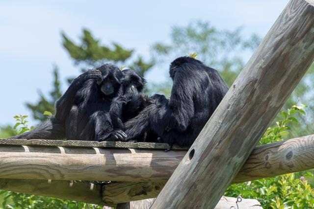Norfolk Zoo-7